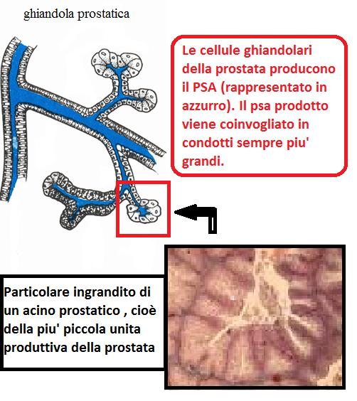 Prostamol uno vélemények a prosztatagyulladásról